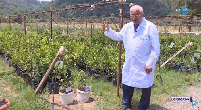 AzTV-də Lənkəran Regional Elmi Mərkəzində yetişdirilən yeni sitrus bitkiləri barədə reportaj yayımlanıb